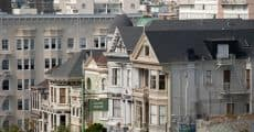 paintedladies-3