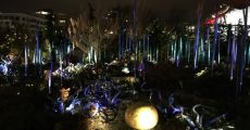 seattle chihuly-5