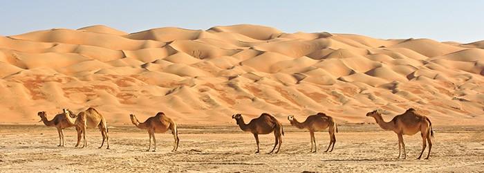 Urlaub in der Wüste: 5 Nächte im top 4*Hotel nahe Abu Dhabi inkl. Frühstück, Flug und Transfer ab 534€