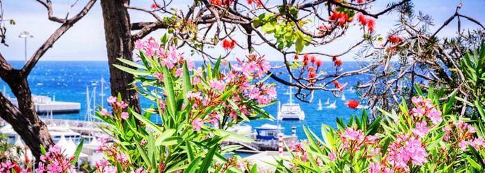 Madeira: 7 oder 14 Nächte im 4* Hotel inkl. Frühstück + Flug ab Wien oder München + Transfer ab 449€ p.P.