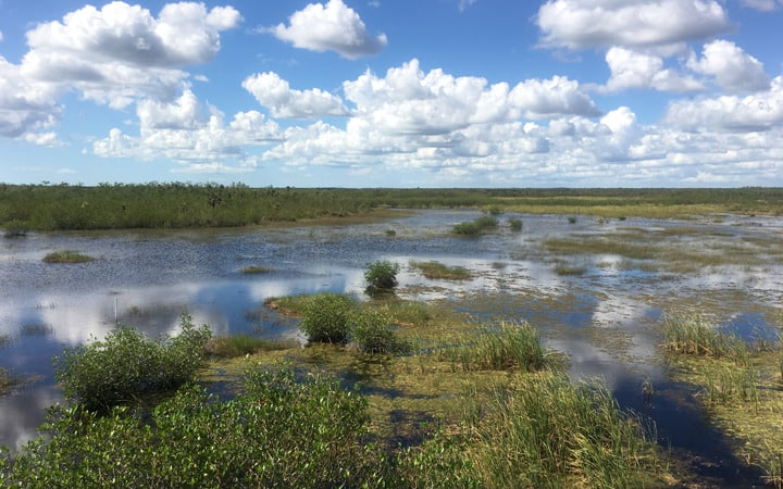 Everglades Slideshow 3
