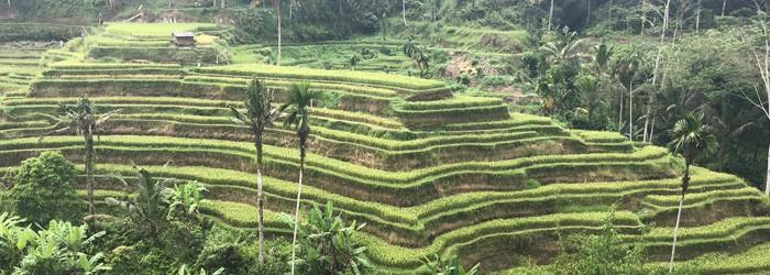 Bali Natur – Reisterrassen, Wasserfälle und mehr