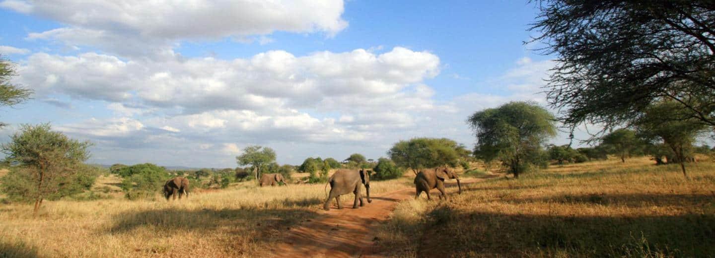 Kenia Safari & Strand Elefanten