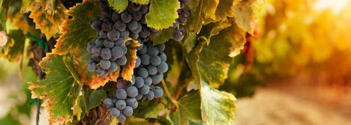 Weinreise – Venetien, Toskana & Piemont