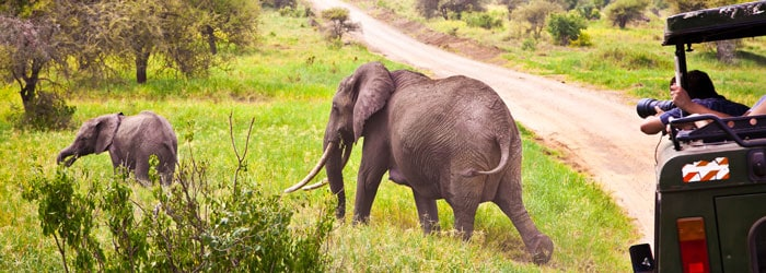 Tansania Safari – Sansibar Urlaub