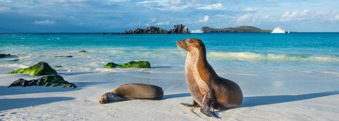 Ecuador Rundreise & Galapagos Inseln
