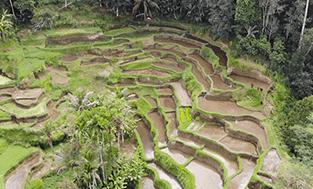 Bali Reisebericht